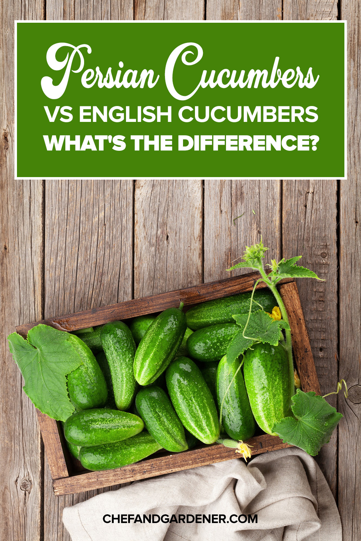 persian cucumbers vs english cucumbers