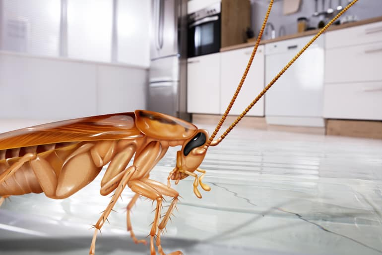 getting rid of cockroach in the kitchen