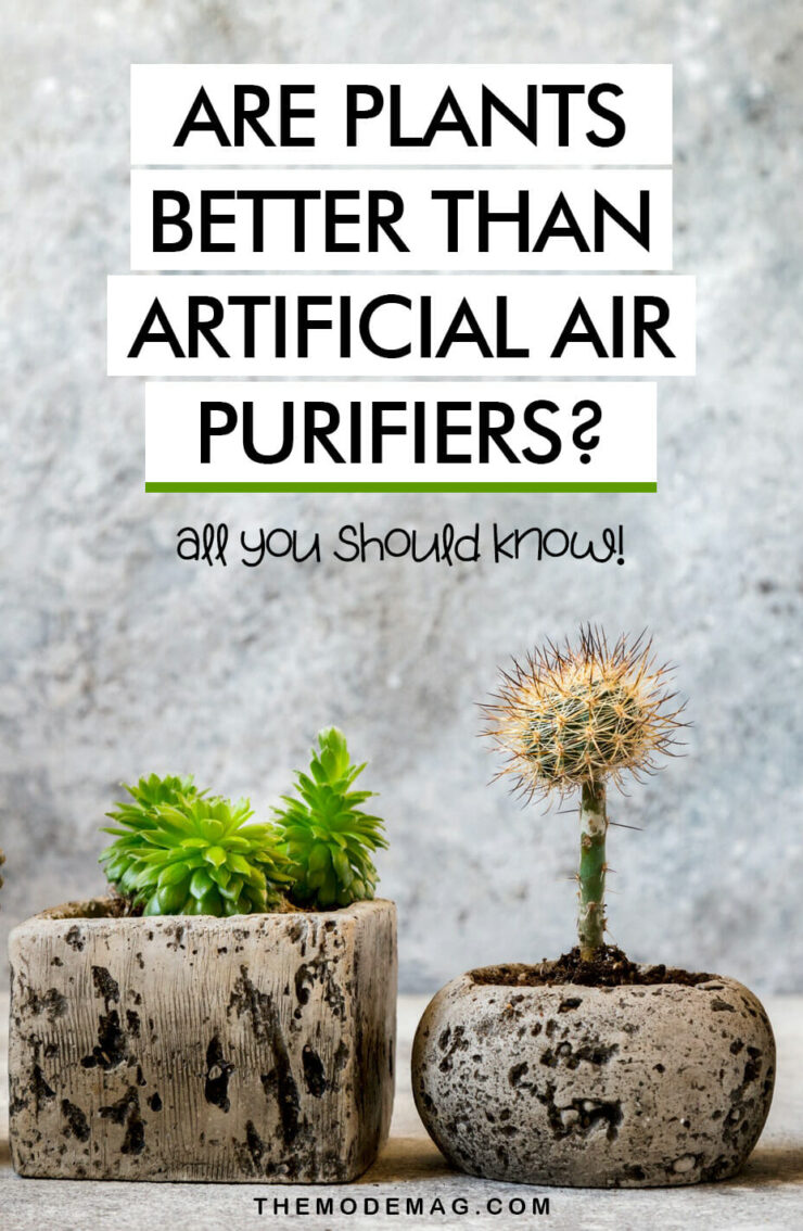 Are Plants Better Than Artificial Air Purifiers?