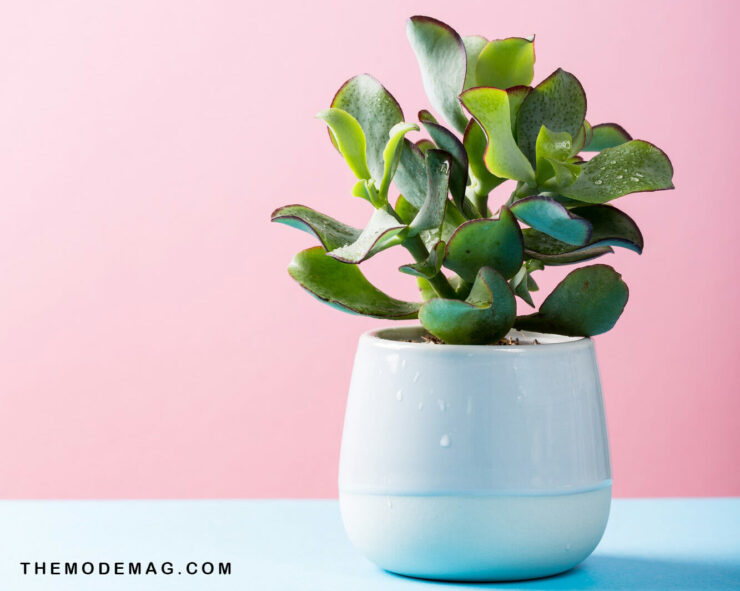 What Plants Are The Best For Purifying The Air?
