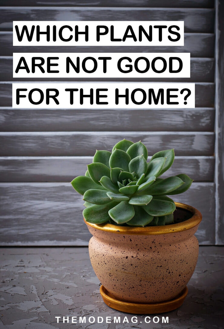 Which Plants Are Not Good For Home?