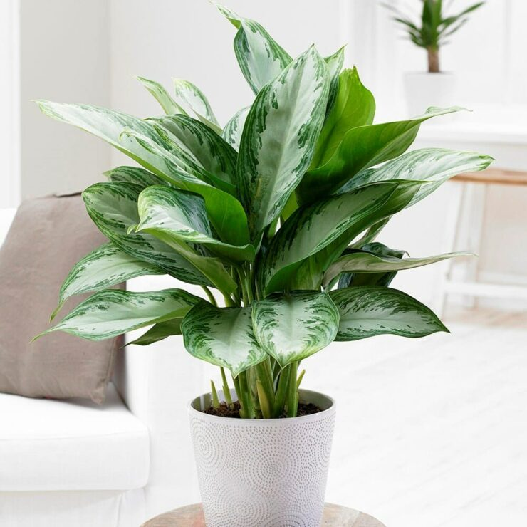 Indoor plants that don't need sunlight