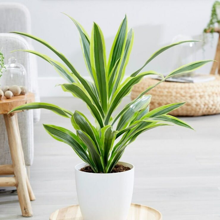 indoor plants no sunlight