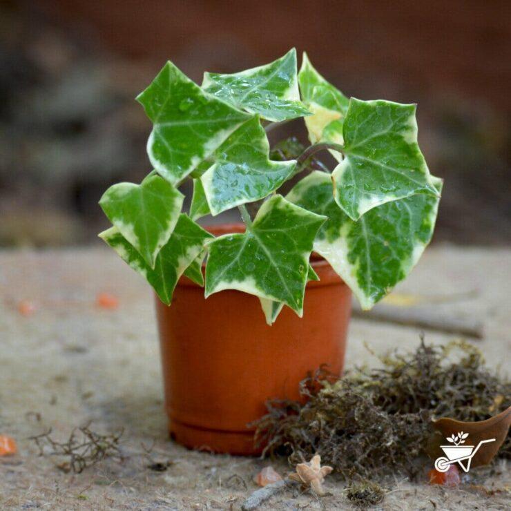 best indoor plants no sunlight needed