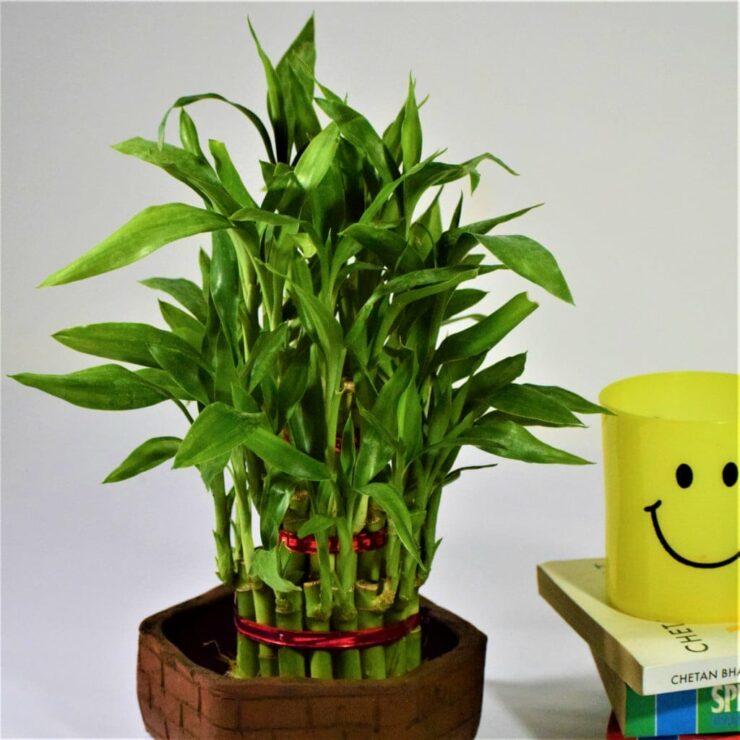 best indoor plants without sunlight