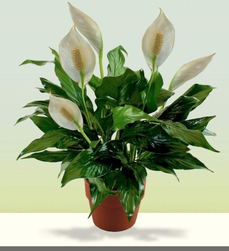 indoor plants no sunlight needed