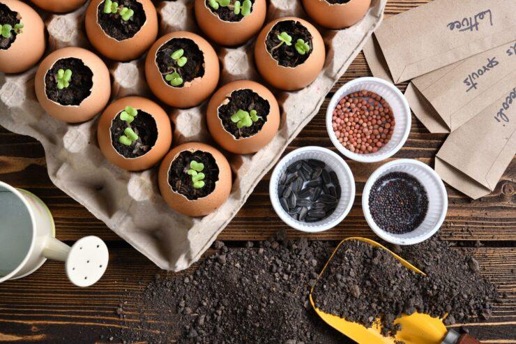 Planting seeds in eggshels